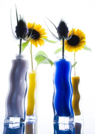 helianthus: Helianthus and thistles
