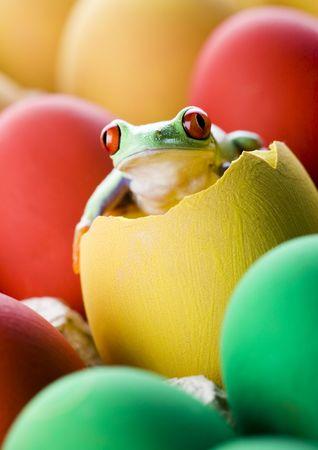 rotaugenlaubfrosch: Easter red frog