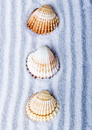 gastropod: Shells