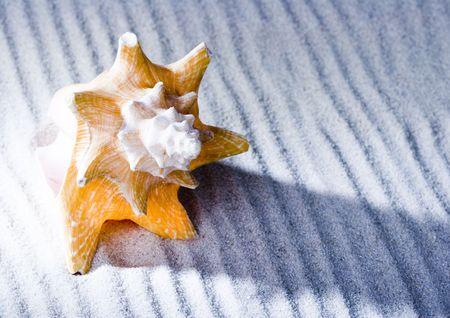 gastropod: Shell Stock Photo