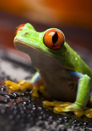 extintion: Red frog