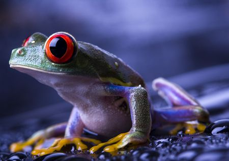 extintion: Frog Stock Photo