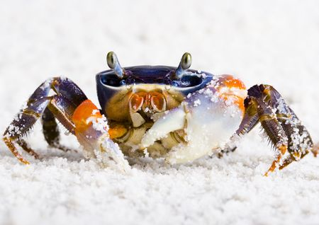 colours tints: The crab on the sand Stock Photo