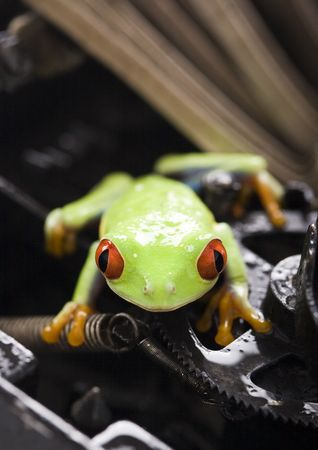 function key: Frog - small animal with smooth skin and long legs that are used for jumping.