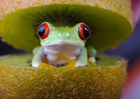 anura: Frog - animales peque�os con piel suave y patas largas que se usan para saltar.  Foto de archivo