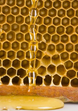 sucrose: Honey is a sweet and viscous fluid produced by bees and other insects from the nectar of flowers.