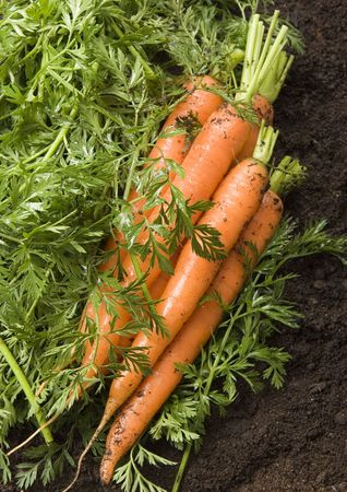 dampen: The carrot is a root vegetable, typically orange or white in colour with a woody texture. Stock Photo