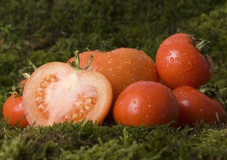 dampen: Tomato - is a cultivated plant. It is commonly cultivated because of its juicy fruits, which are full of vitamins, nutritions and mineral salts.