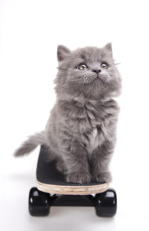 Skateboard, Little gatito gris photo