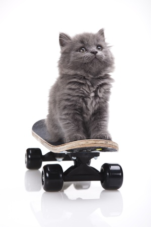 Skateboarding cat  photo