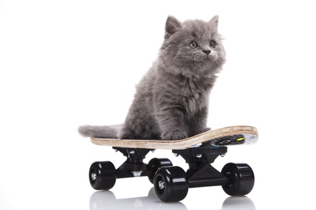 Skateboard, Little gray kitten photo