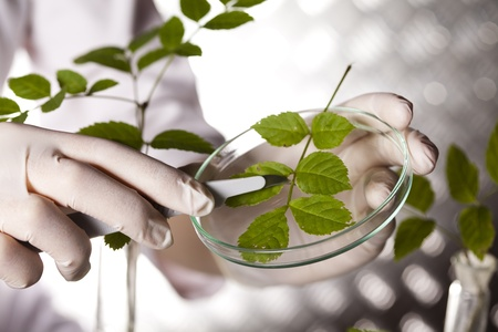 Plant in a test tube in hands of the scientist  photo