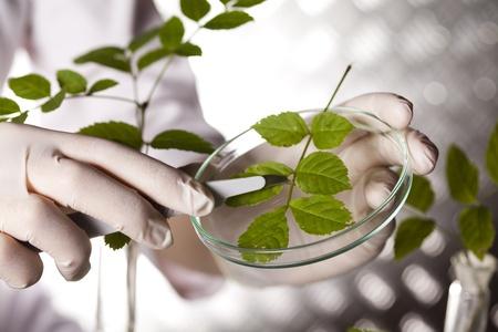 Plant in einem Reagenzglas in der Hand des Wissenschaftlers