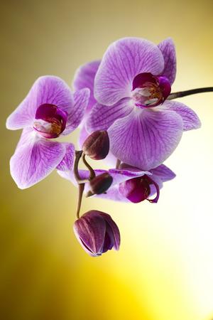Beautiful orchid photo