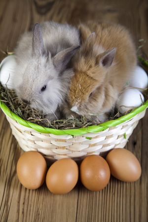 sweet grasses: Happy easter, Easter bunny  Stock Photo