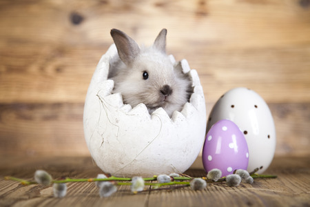 Easter bunny with egg  photo