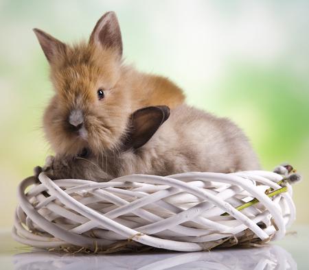 sweet grasses: Little bunny