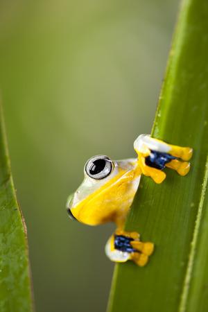 Exotic frog  photo
