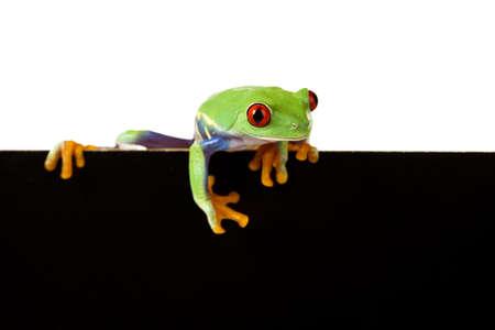 blue frog: Marco de rana
