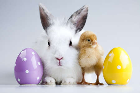 bunny: Easter bunny on chick white background