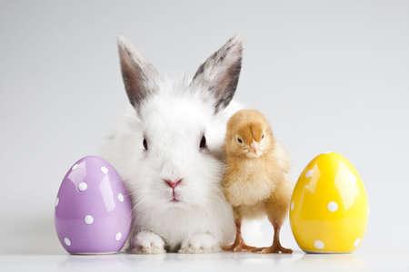 Happy Easter animal Stock Photo