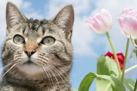 Kitty in the Flower Garden photo