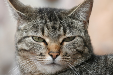 disturbed: Tabby cat with an irritated expression due to its disturbed sleep Stock Photo