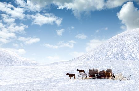 Horses out on snow covered field photo