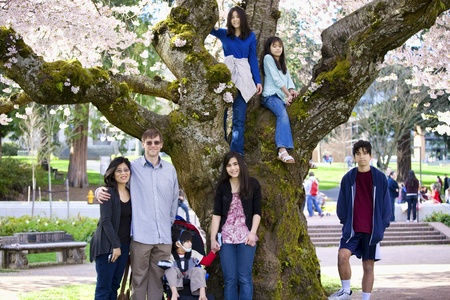 Multiracial family of seven next to cherry tree in full bloom. Spring time.Little boy in wheelchair disabled with cerebral palsy photo