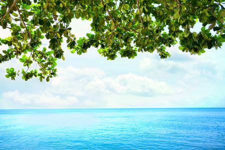 overhanging: Green leaves from overhanging tree framing  blue ocean horizon