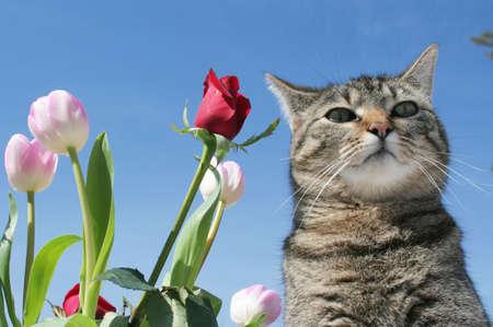 gray tabby: Gray tabby cat proudly standing in her flower garden Stock Photo