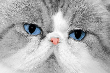Close up of cats face Stock Photo
