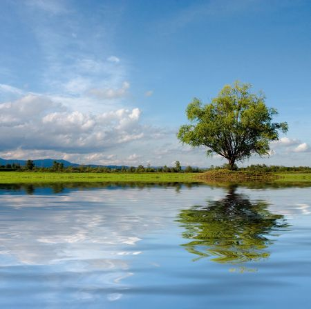 Lonely tree on meadow with interesting clouds and water reflection