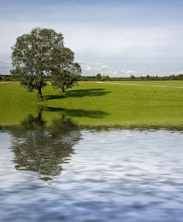 Two trees on meadow with water reflection