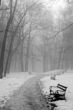 Benches in woods under snow