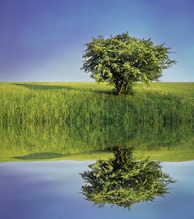 Lonely tree on meadow with reflection in water Stock Photo - 1511116