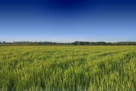 Meadow in the spring with clear blue sky Stock Photo - 1535006