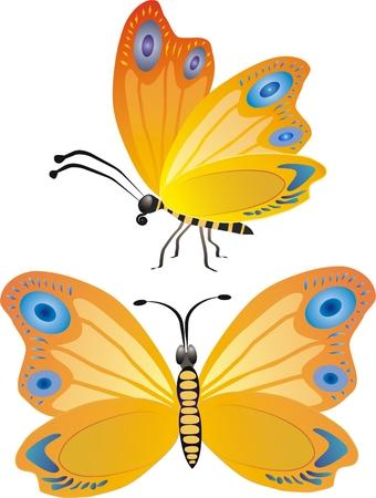 wingspan: Vector farfalla in due posizioni Vettoriali