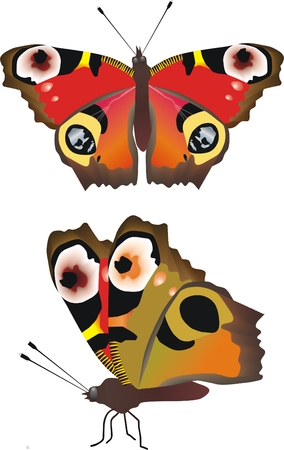 wingspan: Vector butterfly in two positions