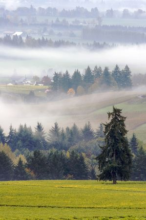 Oregon wine country vineyard in early morning fog. The leaves have changed in the vineyard and the feeling is a brisk fall morning in beautiful morning light.  Serenity, Peace, Tranquility seaqqp form this photo. Stock Photo