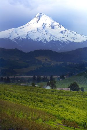 Mt Hood in the Countryside Stock Photo - 786252