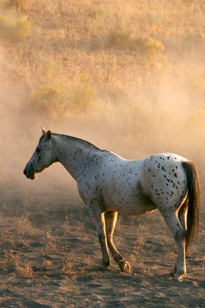 White Horse Resting in the Dust