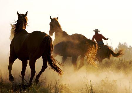polvo: Caballos salvajes que funcionan a trav�s de desierto Foto de archivo