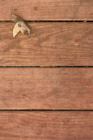 Fallen autumn leaf on background of redwood deck boards Stock Photo
