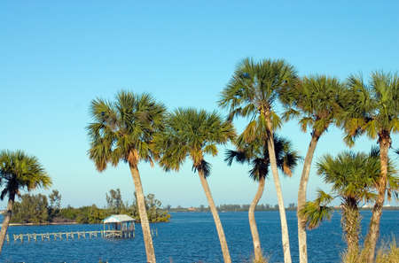 riverfront: Palm trees qrowing along the riverfront on a clear, bright day with a boathouse and dock in the background Stock Photo