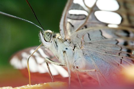Close up of a butterfly. Stock Photo - 518159