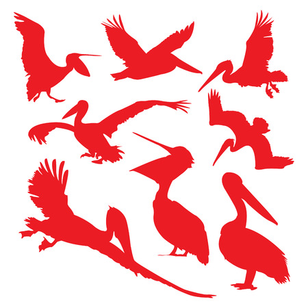 Pelican in red silhouettes. Illustration