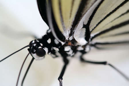 Butterfly close-up. Stock Photo