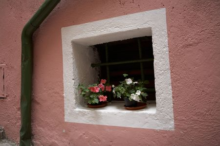 flower on the pink wall Stock Photo - 611087