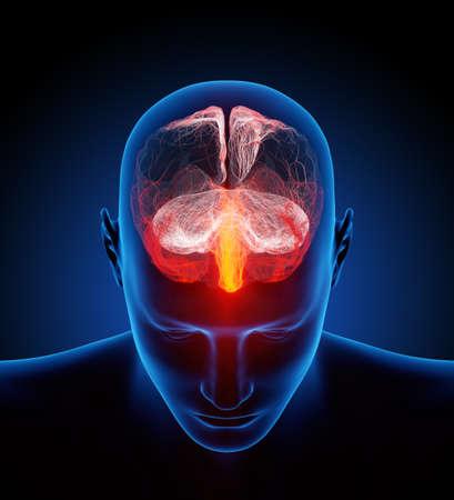 nerveux: Le cerveau humain illustr� avec des millions de petits nerfs - Conceptuel rendu 3d